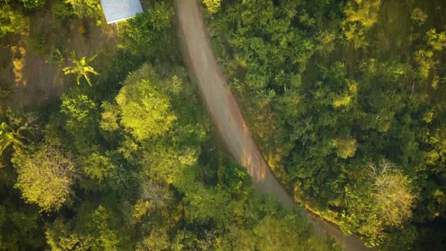 Winding dirt road in a thick tropical jungle