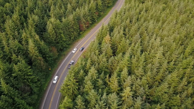 Winding Road Through Managed Forest in Pacific Northwest - Aerial Shot video