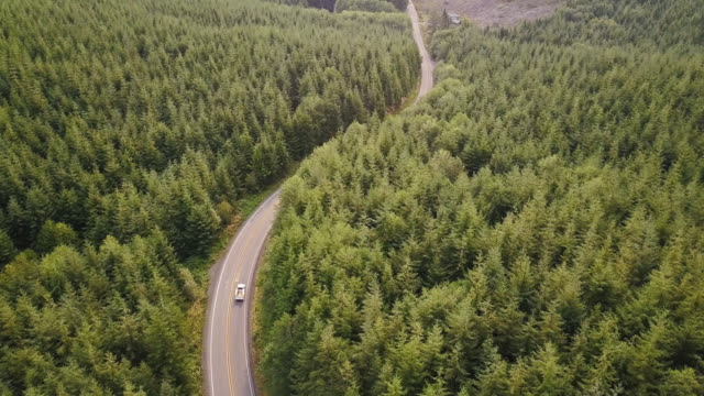 winding road through managed forest in pacific northwest - aerial shot - viaggio su strada video stock e b–roll