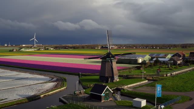 風車、オランダチューリップフィールドに - オランダ点の映像素材/bロール