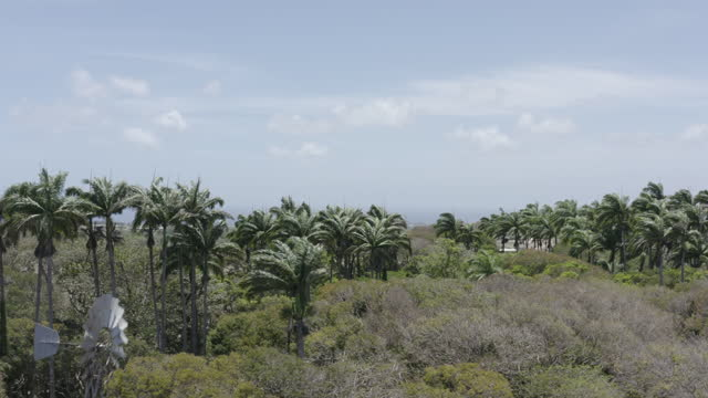 Windmill in a Caribbean pasture by drone (rise) video