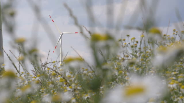 Windmill view through the grass energy production video