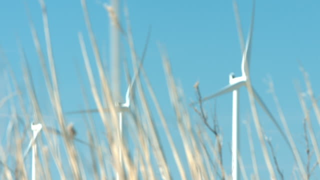 Windmills turning with corn in foreground video