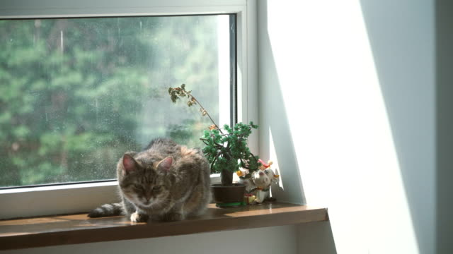 window. the cat lies on the windowsill near the window - gatto soriano video stock e b–roll