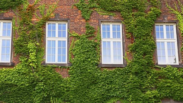 벽에 오래된 집의 창문은 아이비와 함께 맨트 - 아이비 스톡 비디오 및 b-롤 화면