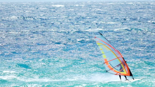 Windsurfing competition, skilled athlete enjoying speed sailing, extreme sport video