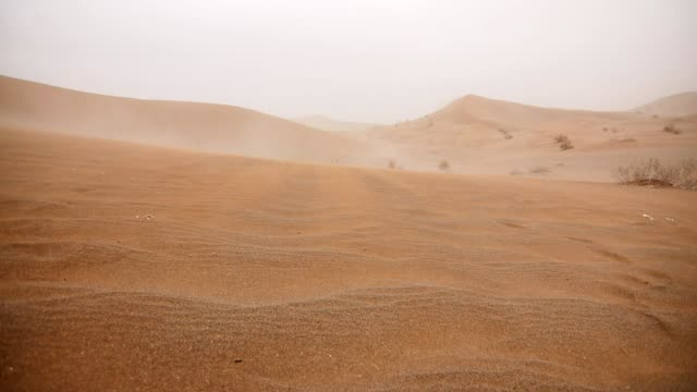 windy sand dune - coloniale video stock e b–roll