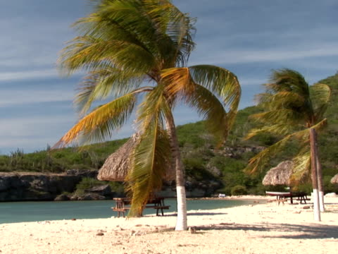 PAL: Windy tropical beach on Curacao flowering plant stock videos & royalty-free footage