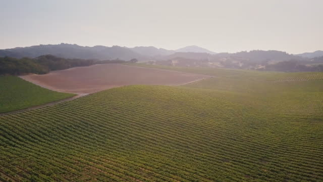 Wine Country Landscape - vídeo