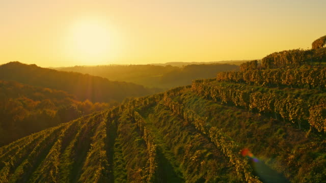 AERIAL Wine-growing district of Prekmurje video