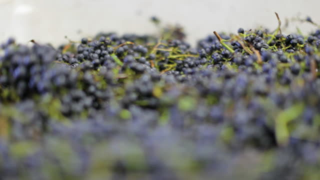 Winemaking - Grape Bin