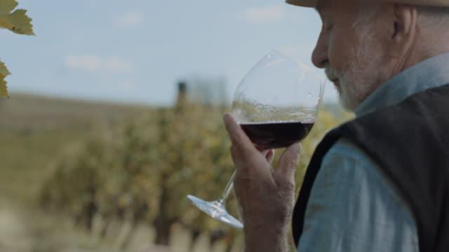 vídeos de stock, filmes e b-roll de degustação de vinhos! - vinho