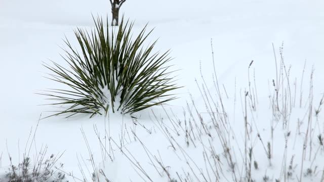 inverno e neve - disordine affettivo stagionale video stock e b–roll