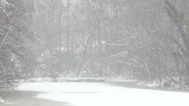 Winter Blizzard Snowing on Lake and Trees (Video) video