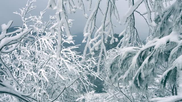 Winter Branch video