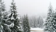 istock Winter Carpathian, fly over fir tree in the snowstorm 694678798