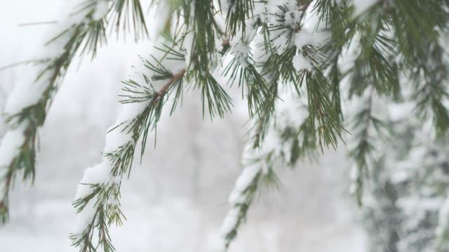 winter christmas muster. hintergrund vom fallenden schnee auf den grünen fichtenzweigen. gekünzte fichtenzweige unter dem gewicht von schnee. winter im stadtpark - laub winter stock-videos und b-roll-filmmaterial