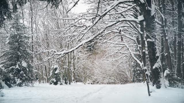 Winter day in oak grove after snowfall in December