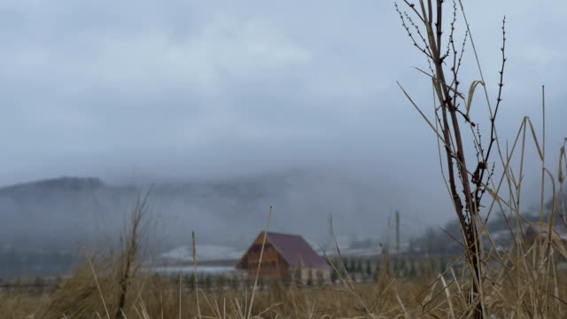Winter Dead Vegetation video