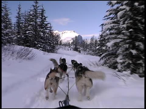 Winter Dog Sledding video