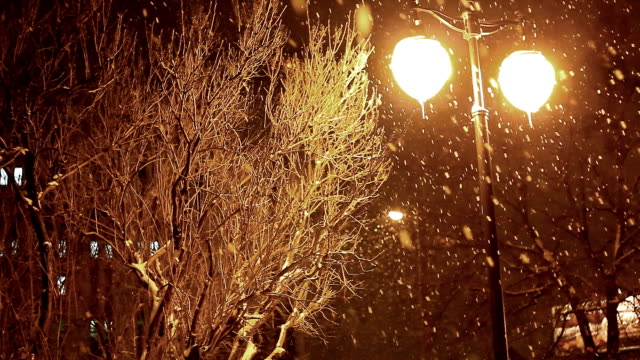 winter evening in city park, falling snow video