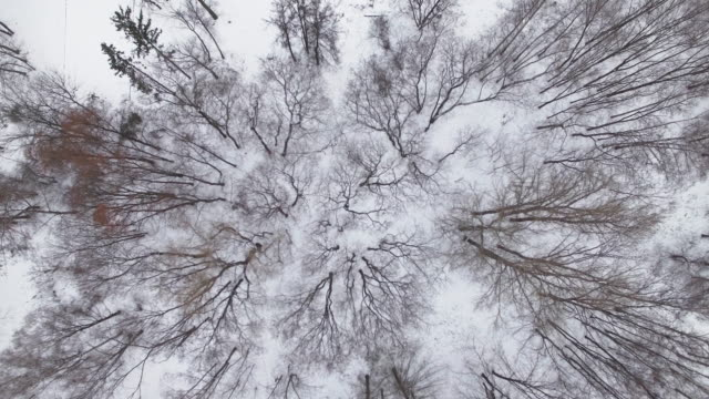 Winter forest - aerial view video