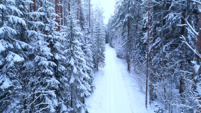 Winter forest and snowy road.