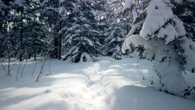 冬の森, 北海道, 日本 - 霜点の映像素材/bロール