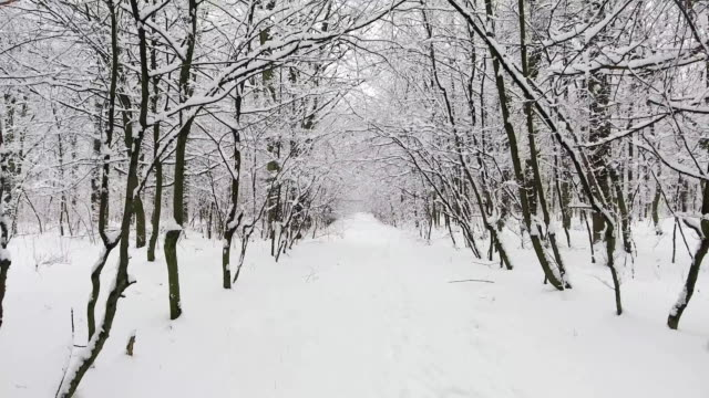 Winter Forest in Snow video