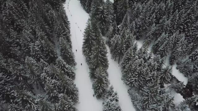 tatras 'da kış ormanı - zakopane stok videoları ve detay görüntü çekimi