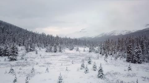 foresta invernale nella neve - composizione orizzontale video stock e b–roll