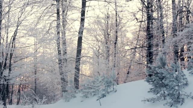 winter-wald landschaft. winter szene. schwenken auf winter wald - kiefernwäldchen stock-videos und b-roll-filmmaterial