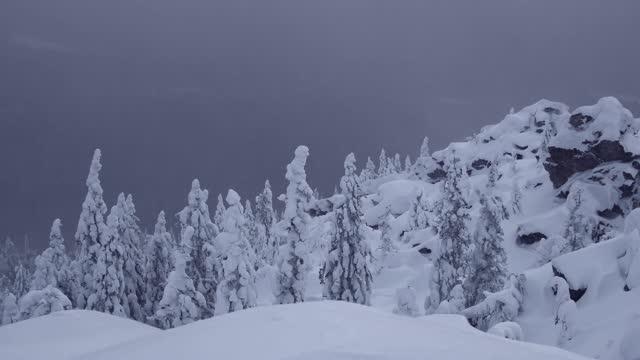 winterwald auf dem gebirge. die steinklippe ist mit schnee bedeckt. grauer himmel über tannenden tannenkronen lässt raum für text. bäume sind gefroren und mit frost bedeckt. wolken und nebel fegen über den hang. - kieferngewächse stock-videos und b-roll-filmmaterial