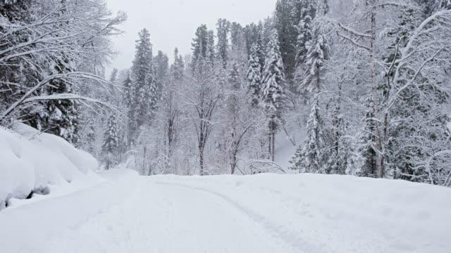 teletskoe 湖の堤防上に重い雪で冬の林道 - シベリア点の映像素材/bロール