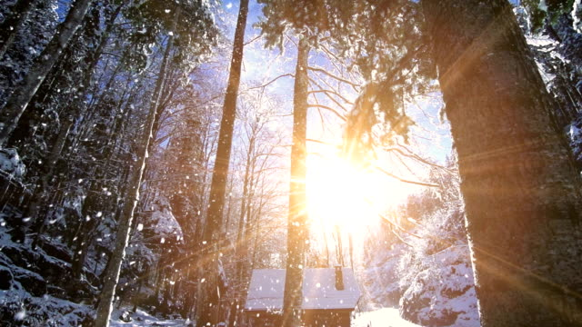 winter forest snow falling slow motion magic hour sunset video