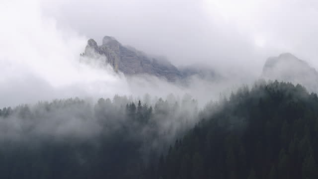 winter forest timelapse on the dolomites - nebbia video stock e b–roll