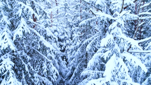Winter forest. Trees and branches in the snow.