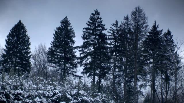 vídeos de stock e filmes b-roll de floresta de inverno - oscilar