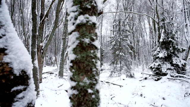 Winter forest video