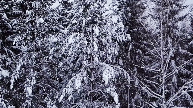 Winter forest. video