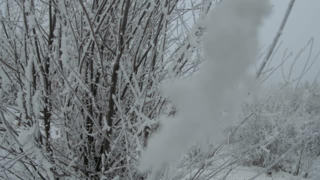 冬の冷凍ブッシュ - イヌバラ点の映像素材/bロール