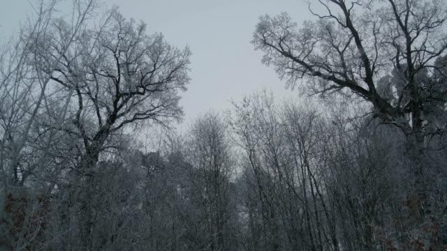 sagome di alberi ghiacciate invernali - albero spoglio video stock e b–roll