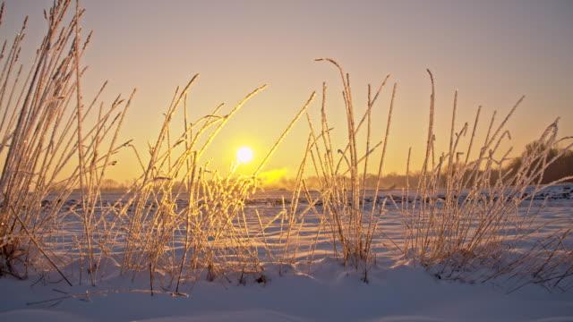 vidéos et rushes de ws ds herbe d'hiver recouverte de givre - tige d'une plante