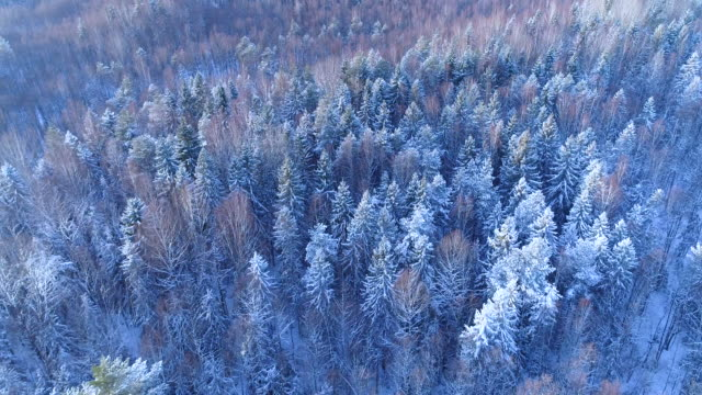 Winter horizon in sunny weather. Snowy forest.