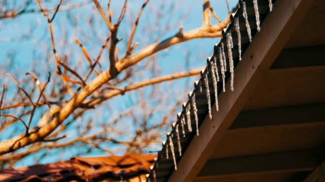 Winter Icicles Melting on the Roof Under the Spring Sun and Dripping from their Tips video