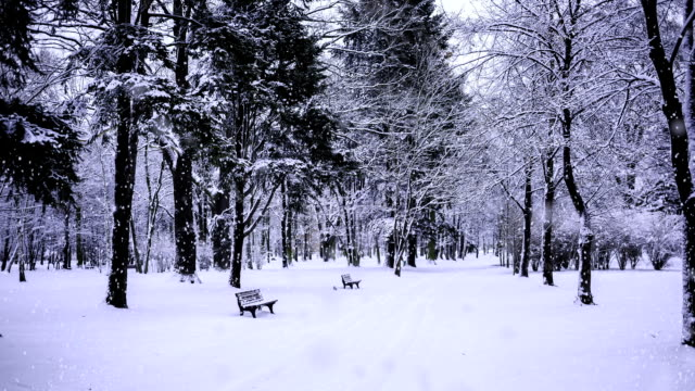 winter in a park (loop) snow falling in a park/forest (looping) alley stock videos & royalty-free footage