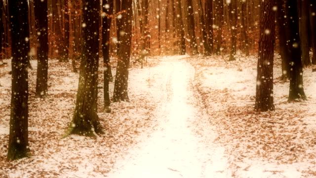 winter im wald loop - laub winter stock-videos und b-roll-filmmaterial