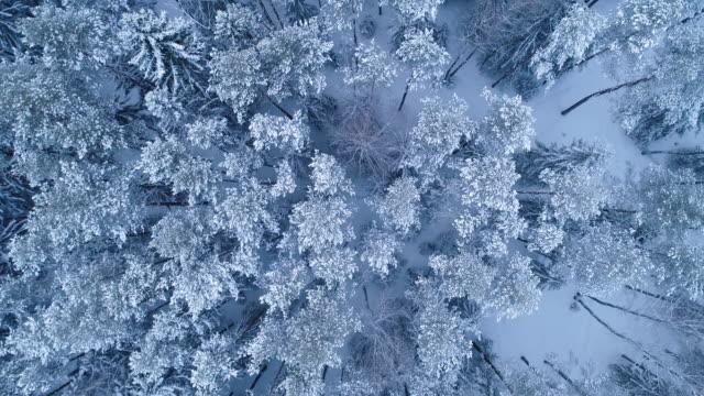 vídeos y material grabado en eventos de stock de paisaje de invierno. vista aérea. - nieve amontonada
