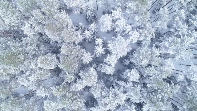 winterlandschaft. luftbild - weißrussland stock-videos und b-roll-filmmaterial