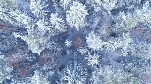 vinterlandskap. flygfoto - polarklimat bildbanksvideor och videomaterial från bakom kulisserna